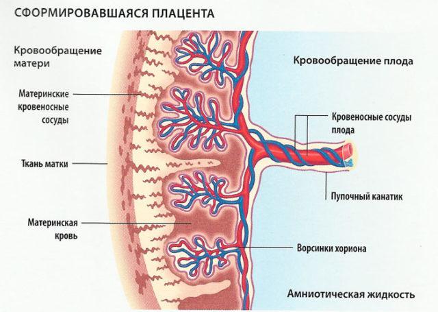 Инфаркт плаценты: причины, симптомы, последствия