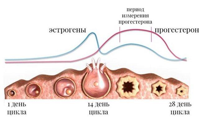Как повысить уровень прогестерона: медикаментозная терапия или народная медицина?