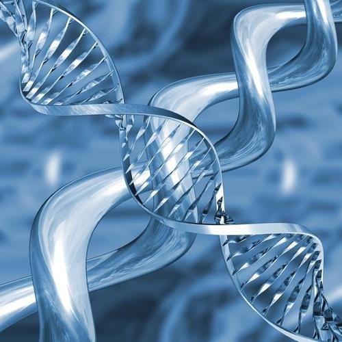 Биопсия ворсин хориона (хорионбиопсия): показания, проведение, достоверность результатов