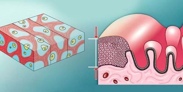 Атрофия эндометрия: особенности течения в репродуктивном возрасте и в постменопаузе