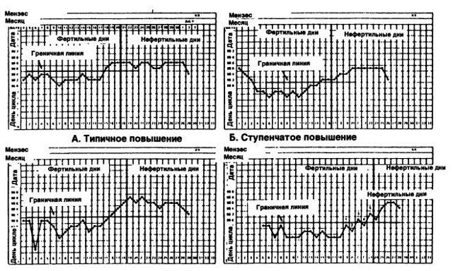 Базальная температура: показания при овуляции, правила измерения, построение графика