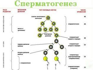 Полиспермия: причины снижения качества спермы и принципы лечения патологии