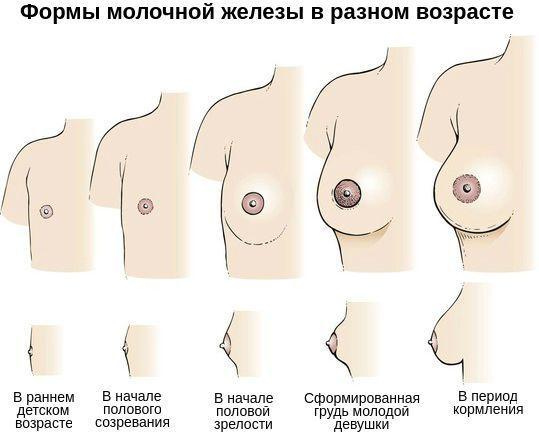 Гипомастия – почему грудь не развивается и можно ли повлиять на этот процесс?