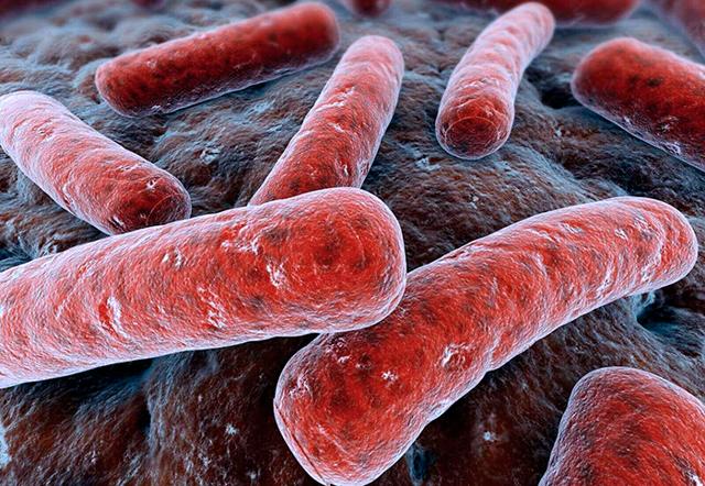 Туберкулез матки: симптомы и пути передачи инфекции, диагностика и лечение