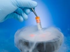 Заморозка яйцеклеток: основные методики проведения, процент выживаемости ооцитов