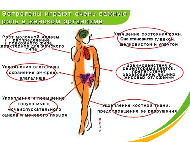 Как понизить уровень эстрогенов у женщин: способы коррекции состояния