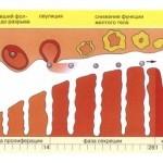 Почему месячные идут 2 раза в месяц (причины): чаще чем раз в месяц