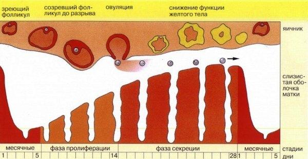Черные месячные (темная кровь), со сгустками, в первый день: Причина
