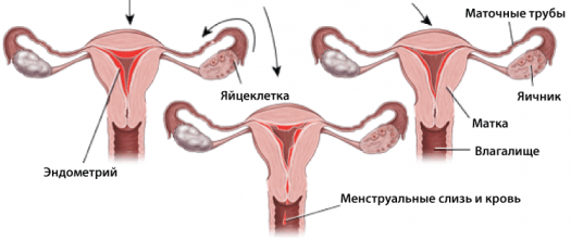 Сколько крови теряет женщина при месячных (за сутки): норма потери крови